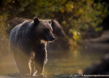 Glamping with Grizzlies